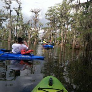 Cajun Swamp Kayak Tour Lake Martin Lafayette LA