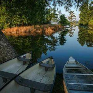 Canoes Champagnes Cajun Swamp Tours Lake Martin La